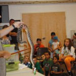 Regal, reclusive and recoiling reptiles at Idyllwild Nature Center