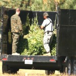 Joint operation snags Hill pot plants worth $21.8 million