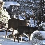Oh deer, it's cold