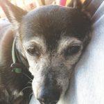 Pet Obituary: Algernon James Marciari