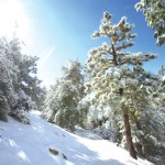 Outside Idyllwild: Winter tips for outside and inside …