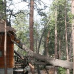 Tree falls on Pine Cove house