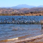 Outside Idyllwild: ACL, PCT, PDT and American coots …