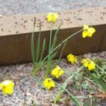 Rain and hail slush-up roadways