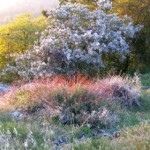 Outside Idyllwild: Wildflower extravaganza …