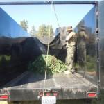 Small marijuana grow eradicated near Lake Hemet