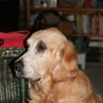Dog poisoning in Fern Valley