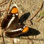 Outside Idyllwild: Flora to fauna …