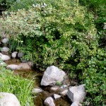 A creek runs through it: Strawberry Creek and right of public access