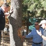 GSOB found in Idyllwild. Pest has killed 80,000 oaks in San Diego County