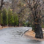 Rain in village of Idyllwild Dec.. 13, 2012. Photo by JP Crumrine