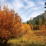 Outside Idyllwild: Observe our seasons — grandiose and subtle changes …