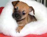 creature corner puppy 2