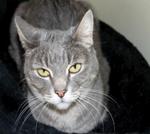 creature corner cat 1