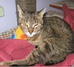 creature corner cat 5