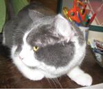 creature corner cat 6