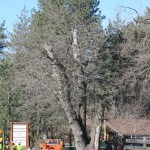 Fire officials still concerned about dying trees: Emergency warning system operational