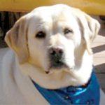Pet Obituary: Springwood's Spirit of Kula