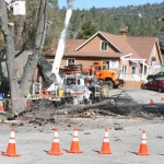 Highway 243 closed for oak borer-infested tree removal