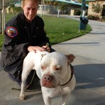 County to consider pit bull sterilization