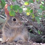 PHOTOS: The local critter population