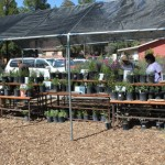 Native plant nursery opens in Idyllwild