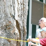 Goldspotted oak borer inspections continue