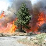 Businesses escape fire damage