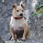 Pet Obituary: Cooper