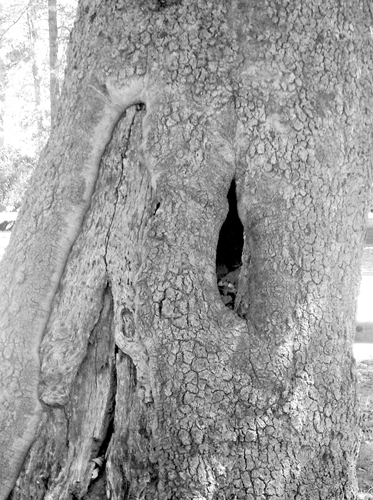 tree trunk_1