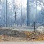 Salvage logging ignores wildfire benefits
