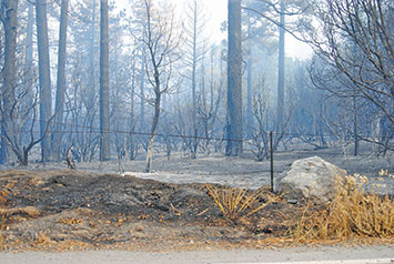 An area burned during the July Mountain Fire.   File Photo