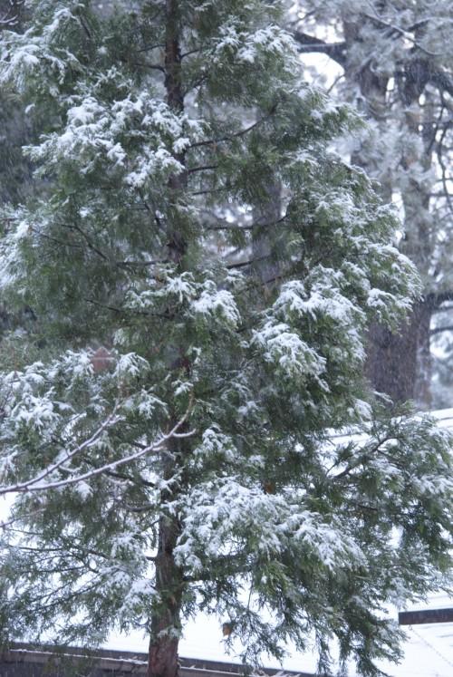 Weather_Dec19_109