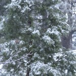 Snow has arrived in Idyllwild, less than original forecast
