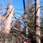 More trees succumb to bark beetle as drought worsens