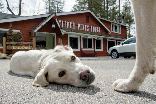 Ted and pal Nanny enjoy a beautiful sunny day in front of the Silver Pines Lodge. Photo by John Pacheco