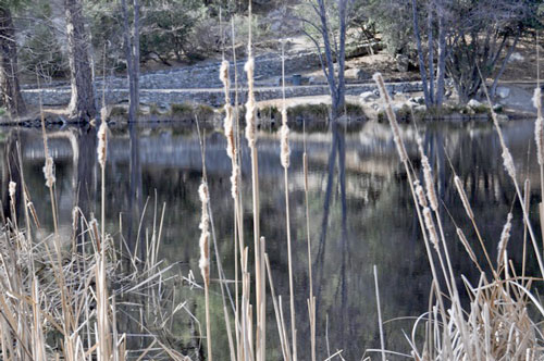 Lake Fulmor was a tranquil mirror last week. Photo by Chip Wallace