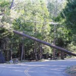 Wind tipping trees in Idyllwild