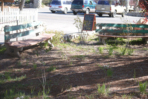 These benches, located at Jo'An's, were donated decades ago to the Izaak Walton League from Gorman Kelley. His granddaughter, Susan Cowper, recommended needed maintenance and relocation of the two benches to the Idyllwild Area Historical Society grounds. Photo by J.P. Crumrine
