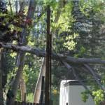 Tree falls in Royal Pines Estates