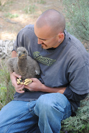 Jeremy Manriquez, a forest volunteer and Mt. San Jacinto College student studying zoology, holds one of the two Lake Hemet bald eaglets, while the other is getting banded on Wednesday, April 30.          Photo by J.P. Crumrine