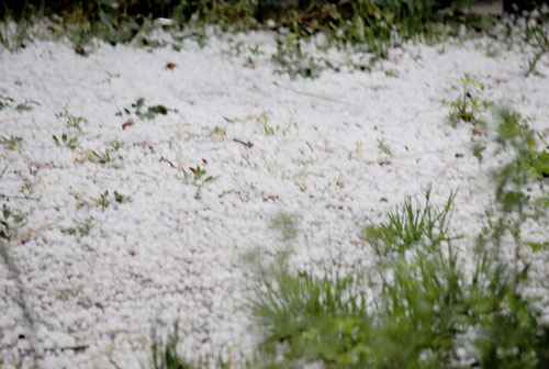 Last Thursday's storm dropped a half-inch of hail. Photo by J.P. Crumrine
