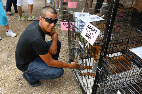 Dominic E. Lopez meets a boxer waiting to be adopted July 4, when ARF and Living Free held a pet adoption and festival at the Idyllwild Community Center site and in the center of town. Photo by Cheryl Basye