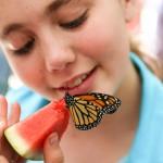 PHOTOS: Butterfly Daze at Nature Center