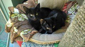 critters-kitten1and2