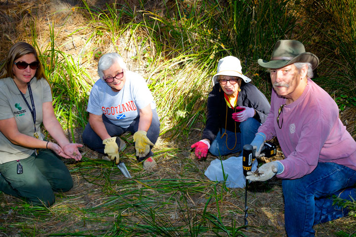 LEMON LILY PLANTING: Jyoti Kintz, Toni Berthelotte, Sue Nash and Neill Bell displaying the lemon lily bulbs they are planting in the streambed behind the Nature Center. Photo by  Gina Genis