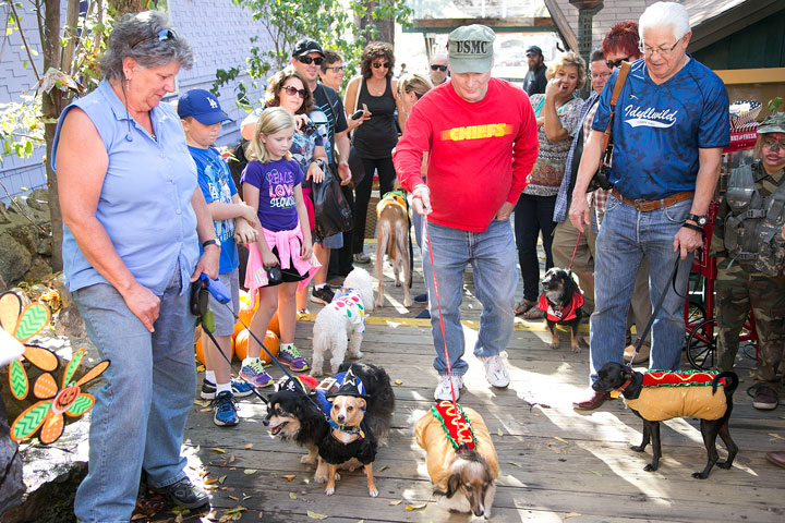 HOT DOG! Dakota (center) and owner Danny Richardson approach the judges to get their first-place prize Saturday during the Harvest Festival Halloween dog costume contest in Village Lane.        Photo by Jenny Kirchner