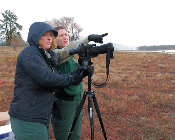 Lareina Van Sant and Heidi Hoggan look across Lake Hemet to spot the two resident bald eagles in a tall tree together. Saturday was the first of four eagle counts; the next is Jan. 10, 2015. Photo by John Drake