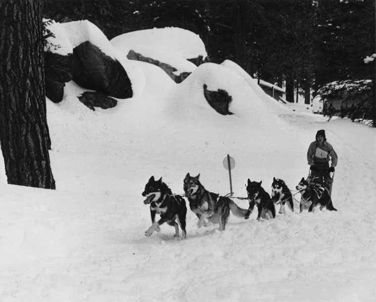 Sled dog races had long been a January feature at the Tramway where snow was usually abundant because of the elevation, shown in this pre-1974 photo. In 1974, the racers were to try Idyllwild, but the snow cover wasn't too promising. File photo