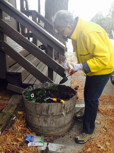 Suzie Bennett, Idyllwild Garden Club treasurer, was out planting bulbs for spring in town planter buckets on Wednesday, Jan. 28. Photo by Halie Wilson